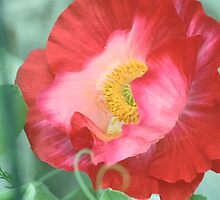 Poppy in the Snow Peas by Barbara Muller