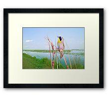 Little Singer in the Marsh Framed Print