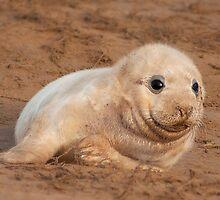 Seal Pup by John Dickson