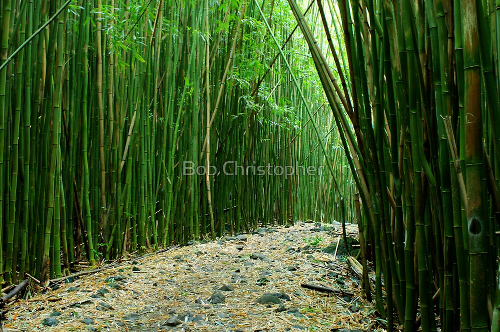 Bamboo Forest Maui by Bob Christopher