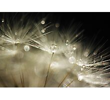 Dandelion macro Photographic Print