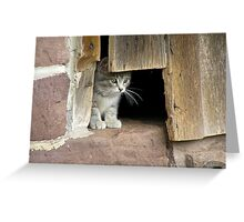 Schaefferstown Farm Kitty Greeting Card
