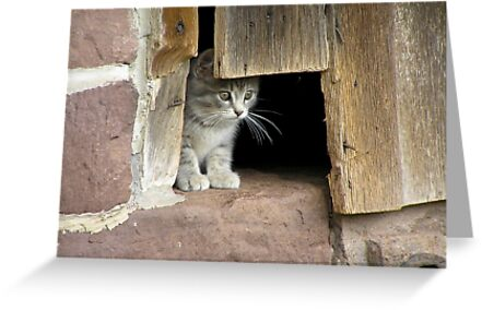 Schaefferstown Farm Kitty by Yvonne Roberts