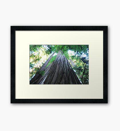 Big Red Woods Framed Print