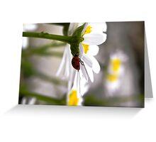 A Ladybug's Daisy Greeting Card