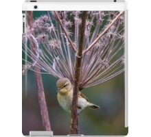 Young Willow Warbler sitting amongst Cow Parsley iPad Case/Skin