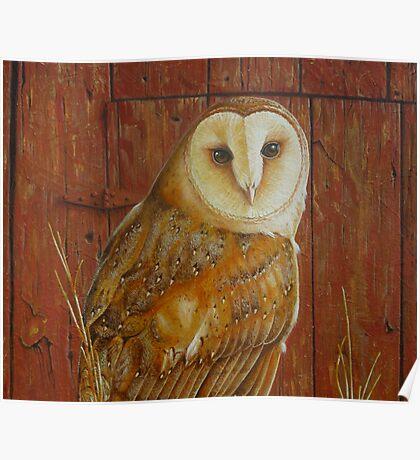 Barn Owl (close up) Poster