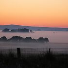 Misty Morning by Malcolm  Taylor