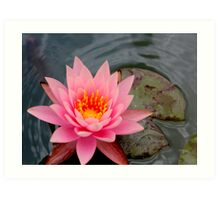Pink Lotus Flower Art Print