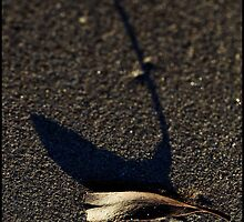 Leaf and shadow by Eleanor Godley