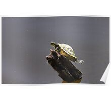 Little Turtle with an Attitude Poster