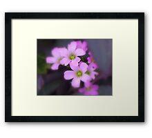 Lavender Spring Beauties Framed Print