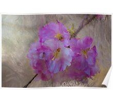 Blossom Intrigue Poster