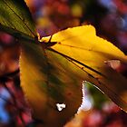 Autumnal leaves by Tiarne White