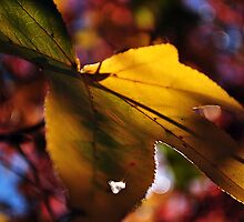 Autumnal leaves by Tiarne Pollock