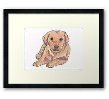 Colour pencil puppy Framed Print