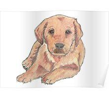 Colour pencil puppy Poster