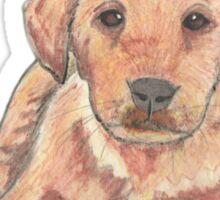 Colour pencil puppy Sticker