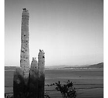 Saguaro at Lake Roosevelt Photographic Print