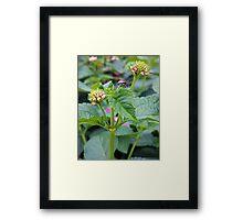 Lantana and the Stink Bug Framed Print