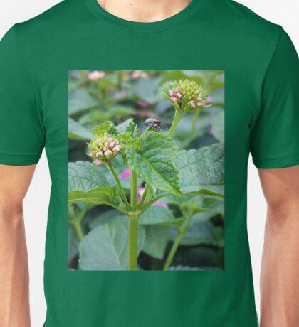 Lantana and the Stink Bug Unisex T-Shirt