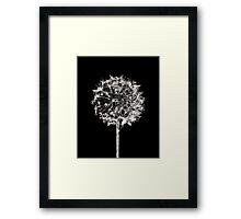 Monochrome Dandelion Framed Print