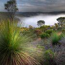 Morning Fog by Adam Burke