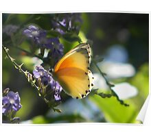 Butterly in sunlight Poster