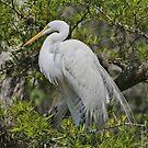 WIldlife In Florida by Deborah  Benoit