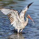 Wings Up by Deborah  Benoit