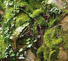 Textured Tree by Sarah Dawson-Spackman