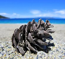 Pine Cone - Beach Surrounded by Pine Trees by Honor Kyne