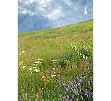 Spring Hillside Photographic Print