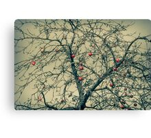 Red Apples in Empty Garden Canvas Print