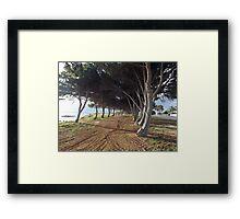 Foreshore Trees at Ceduna Framed Print
