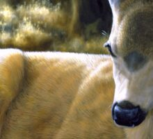 A Quiet Place - Mule Deer Painting - by Crista Forest Sticker