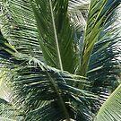 Palm - Palma by PtoVallartaMex