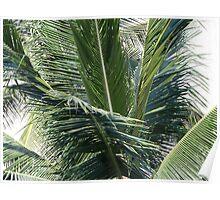 Palm - Palma Poster