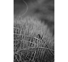 B&W Texture Photographic Print