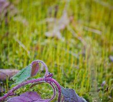 neon dreams by AmbientPhotos