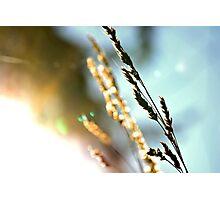 Earthly Beauty Photographic Print
