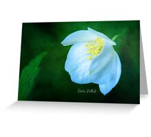 White Cranesbill Blossom Greeting Card