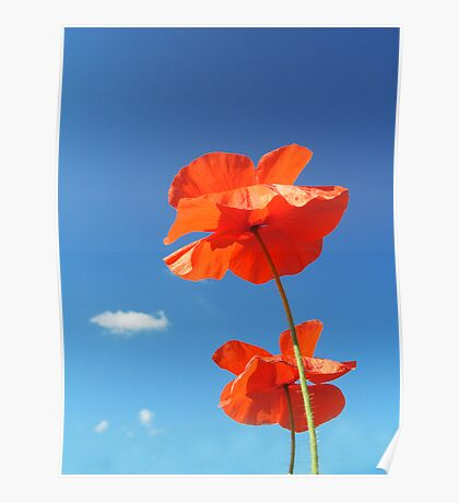 Two Poppies Poster