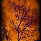 Winter Sunset by Walter Cahn