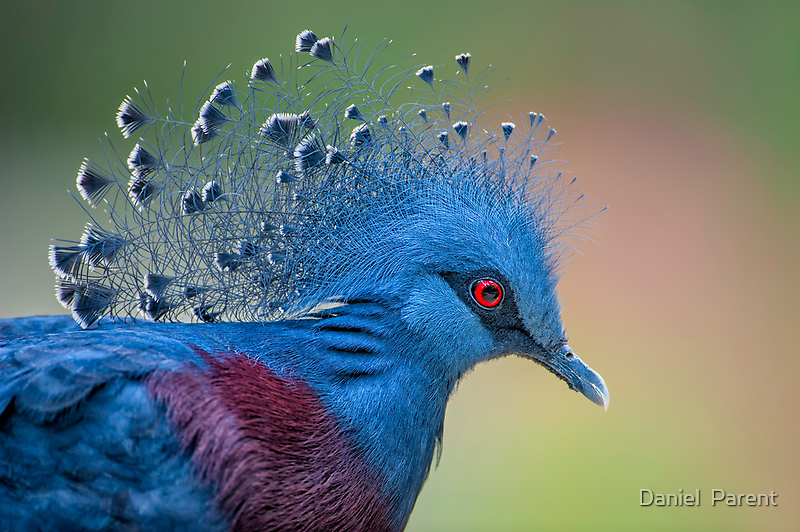 Well Crowned by Daniel  Parent