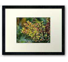 Jungle's Blossoms - Flores De La Selva Framed Print