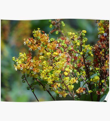 Jungle's Blossoms - Flores De La Selva Poster
