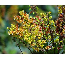 Jungle's Blossoms - Flores De La Selva Photographic Print