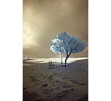 Lone Tree and Chair - Moroccan Sahara Photographic Print