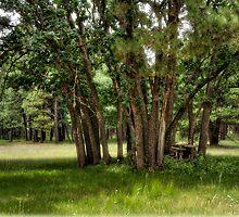 Summer in the Pines  by Saija  Lehtonen